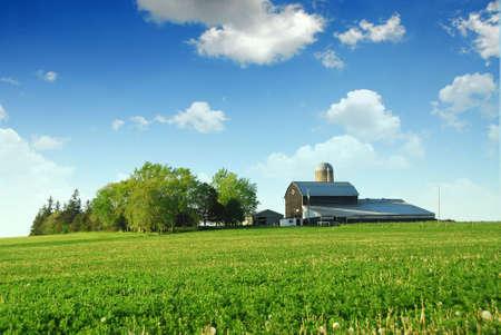 champ de mais: Ferme et grange parmi les champs verts Banque d'images