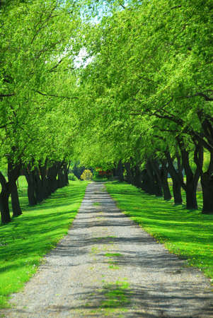 dirt road recreation: Lane of bright green summer trees moving with breeze