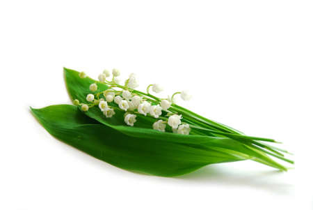 Lily-of-the-valley on white background photo