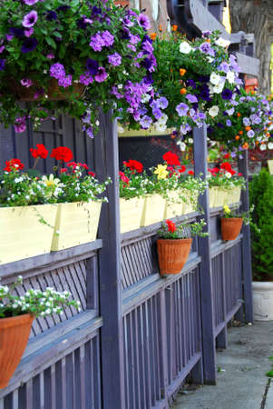 Restaurant Patio Fence With Colorful Flowers Stock Photo   445019
