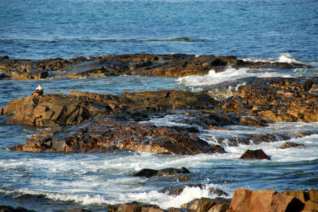 Waves crashing on the rocks near the Atlantic ocean coast in Maine, USA photo
