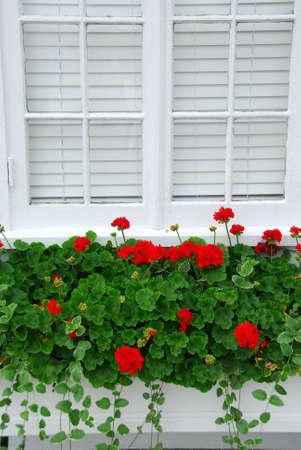 windowsill: Red geraniums on windowsill, vertical Stock Photo