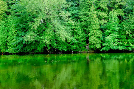 Green reflection of a forest in  calm river water Stock Photo - 486091