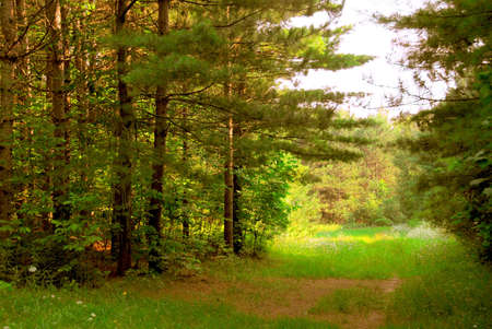 Green quiet forest on hot summer day Stock Photo - 496177