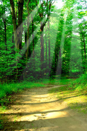 Green quiet forest on hot summer day wih sun beams Stock Photo - 496179