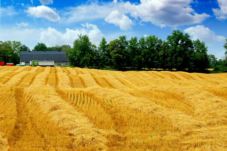 Farm field with yellow harvested grain and farmhouse photo