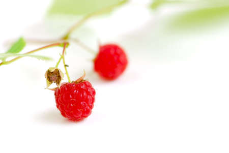 Macro of raspberry branch on white background photo