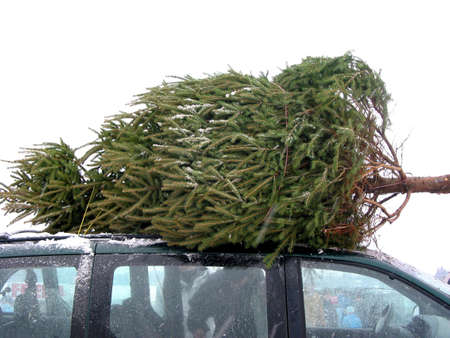 Huge Christmas tree tied to the roof on a minivan Stock Photo - 530414