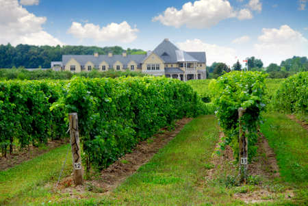horticultural: Vineyard and winery
