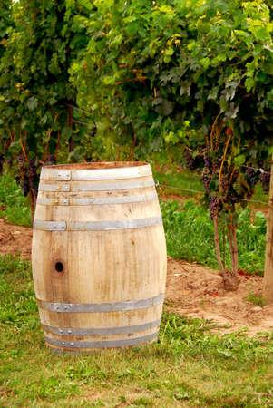 Old wine barrel at vineyard photo