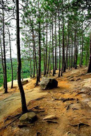 Forest trail on pine cliffs in Algonquin provincial park in Canada Stock Photo - 532704