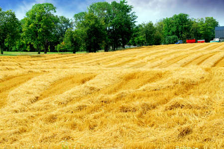 Farm field with yellow harvested grain and farmhouse Stock Photo - 532678