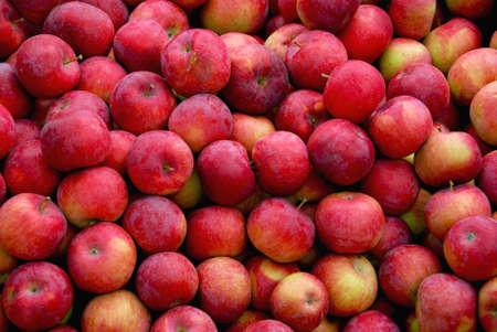 plentiful: Background of fresh red apples Stock Photo