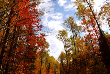 Colorful forest in the fall photo
