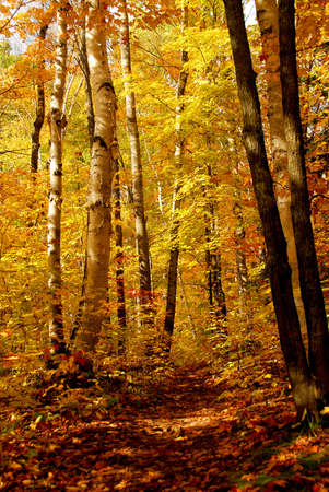 Fall forest background with hiking trail Stock Photo - 552623