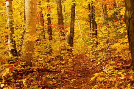 Goldener Herbst Wald mit Wanderweg  Standard-Bild - 552621