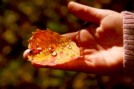 Childs hand holding fall aspen leaf with sparkling water drops photo