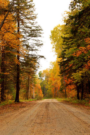 Forest road in the fall photo