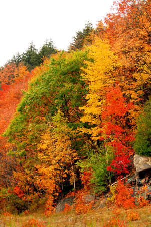 Colorful yellow and red fall forest background Stock Photo - 552595