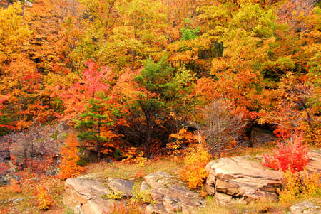 Colorful yellow and red fall forest background Stock Photo - 552592