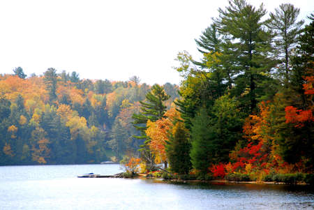 ontario: Lake and forest in the fall in northern Ontario