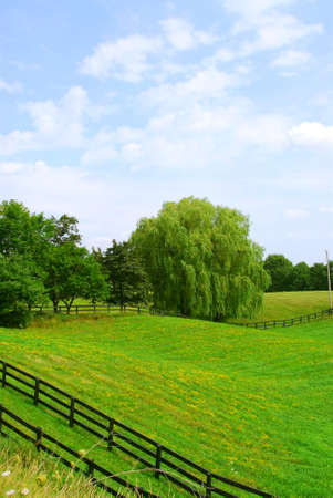 Rural landscape with lush green fields and trees Stock Photo - 557754