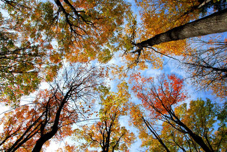 Tops of colorful fall trees on blue sky background photo