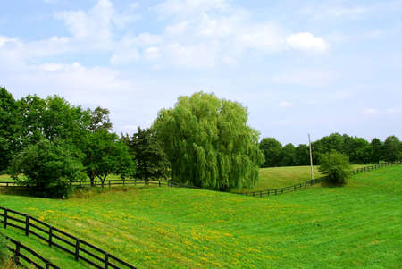 ranching: Rural landscape of lush green fields and trees