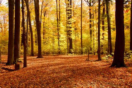erdboden: Bunter Herbst sonnenbeschienenen Wald mit gefallenen Bl�tter, die den Boden