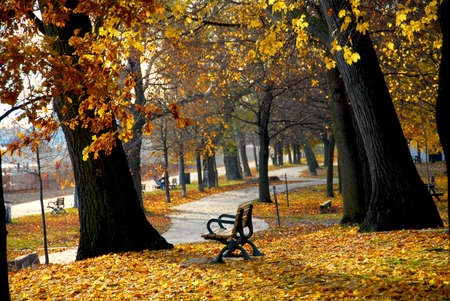 Park with old trees and recreation trail in the fall photo