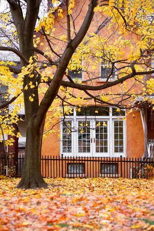 yellow: Residential house and tree in the fall