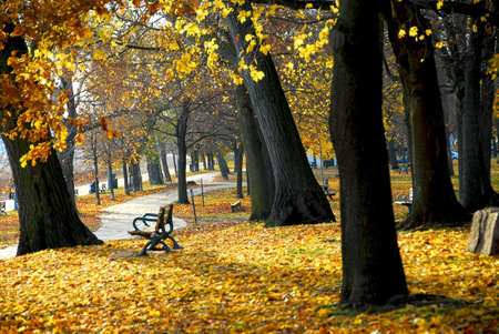 treed: Park with old trees and recreation trail in the fall