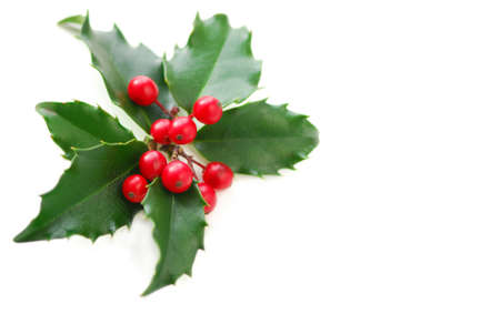 decoration: Christmas holly leaves and berries isolated on white background
