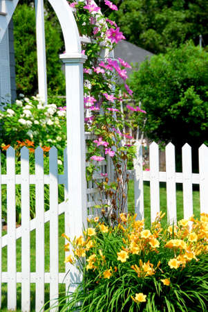 clematis flower: White picket fence and pink clematis at country house