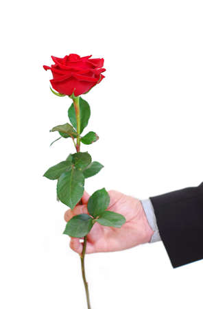 offering: Mans hand holding a red rose on white background Stock Photo