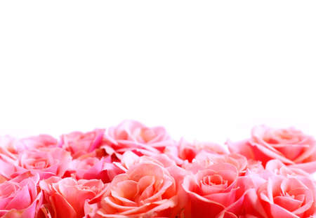Pink rose border with white space for copy Stock Photo - 671748
