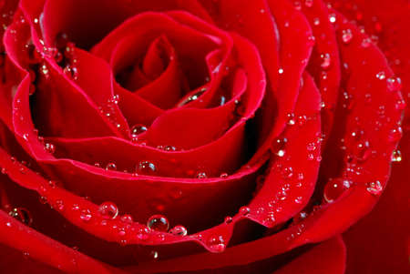 Extreme macro image of a red rose petals with dew drops Stock Photo - 676571