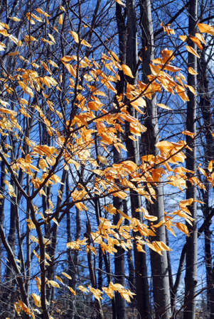 Forest in late fall with bright blue sky photo