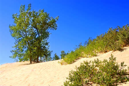 Landscape of sand dunes with clear blue sky Stock fotó