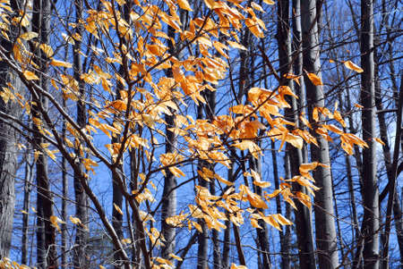late fall: Forest in late fall with bright blue sky Stock Photo