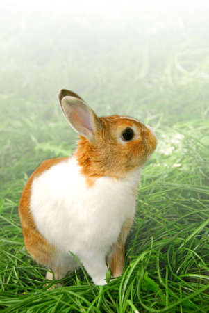 Cute easter bunny sitting on green grass outside, faded white background Stock Photo - 693596