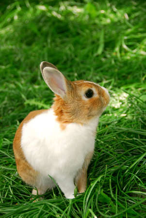 Cute easter bunny sitting on green grass outside Stock Photo - 696182