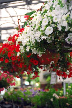 鲜花行在温室的待售