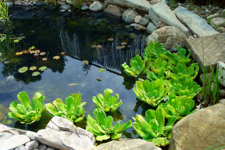 asian house plants: Natural stone pond as landscaping design element