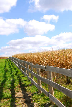 Rural landscape with blue cloudy sky and wooden fence photo