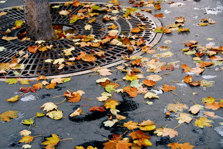 metal grid: Fallen leaves on asphalt sidewalk in the city Stock Photo