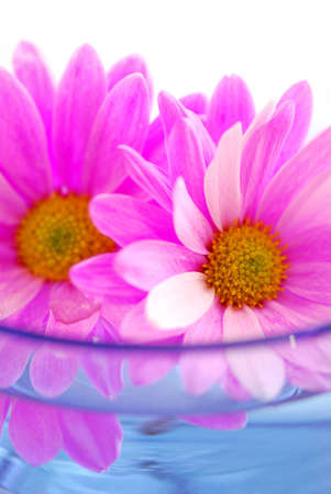 Pink flowers close up floating in water photo