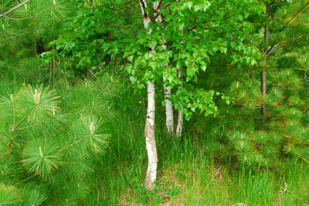 Natural background of lush green spring forest Stock Photo - 765144