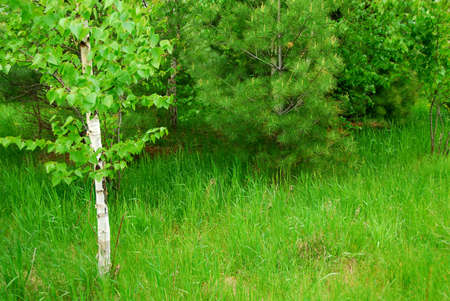 Natural background of lush green spring forest Stock Photo - 779079