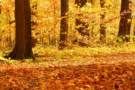 Scenic view of colorful forest in the fall photo